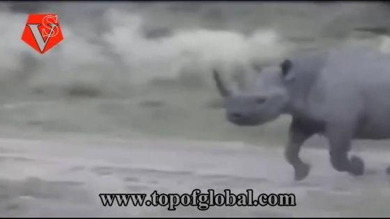 사자 vs. 코뿔소