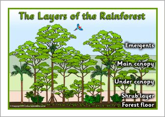 Layers of the rainforest posters (SB10831) - SparkleBox | Year 5 ...