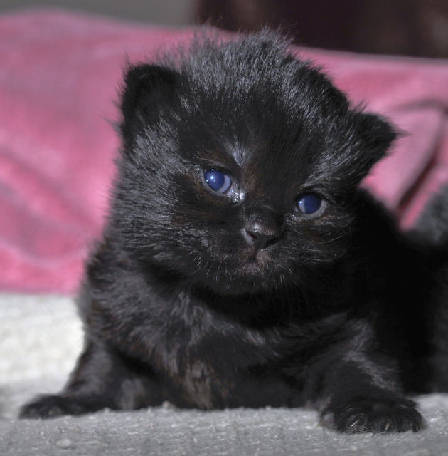 newborn kitten So cute. Incensewoman (With images