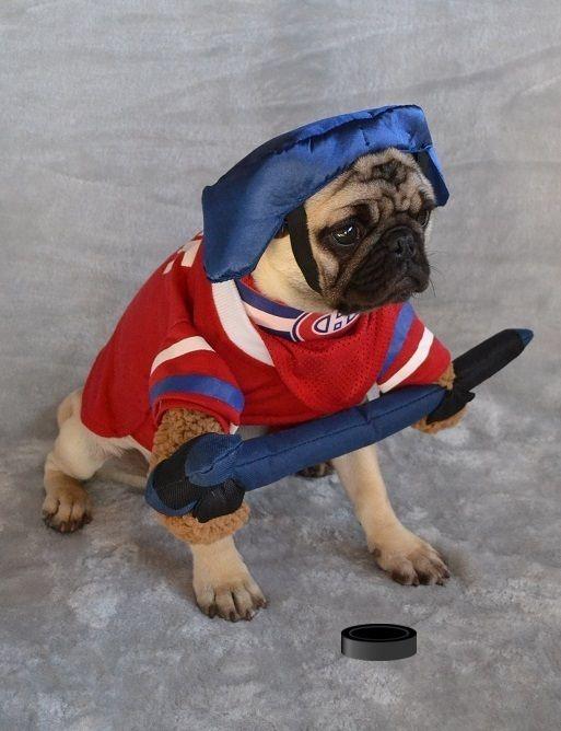 Our Pug Boo The Hockey Player Pugcostume Pughalloween Pughockey Montrealcanadiens Gohabsgo Habsfan Pugmontrealcana Pugs In Costume Dogs Funny Dog Videos