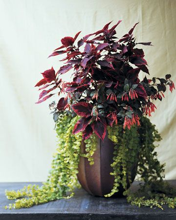 Easy to grow Radish Coleus  Coralle Fuchsia  and Moneywort create a rich. Container Garden Ideas for Any Household   Gardens  Outdoor living