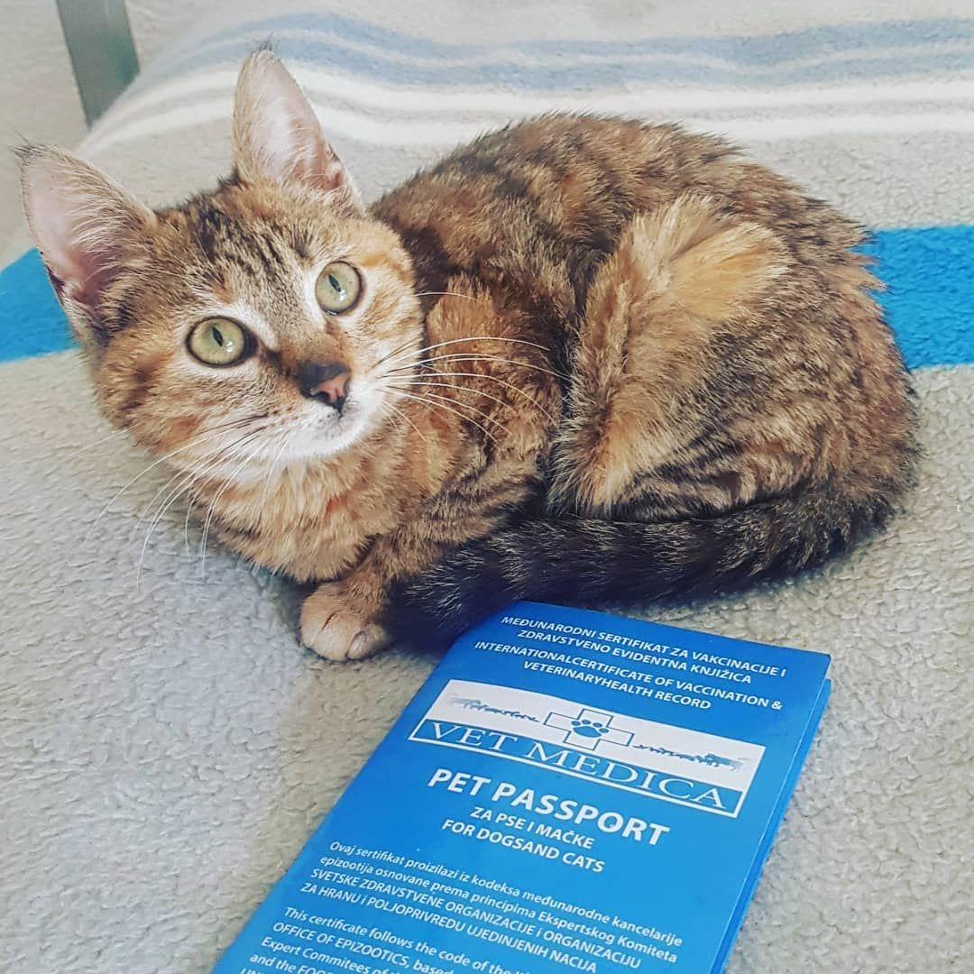 Nala Has Her Pet Passport Cat Travel Cats Stray Cat