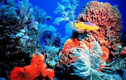 snorkeling coral reefs in