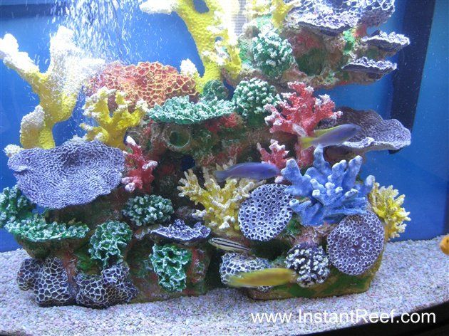 African cichlid reef aquarium look inside my exotic for African cichlid tank decoration