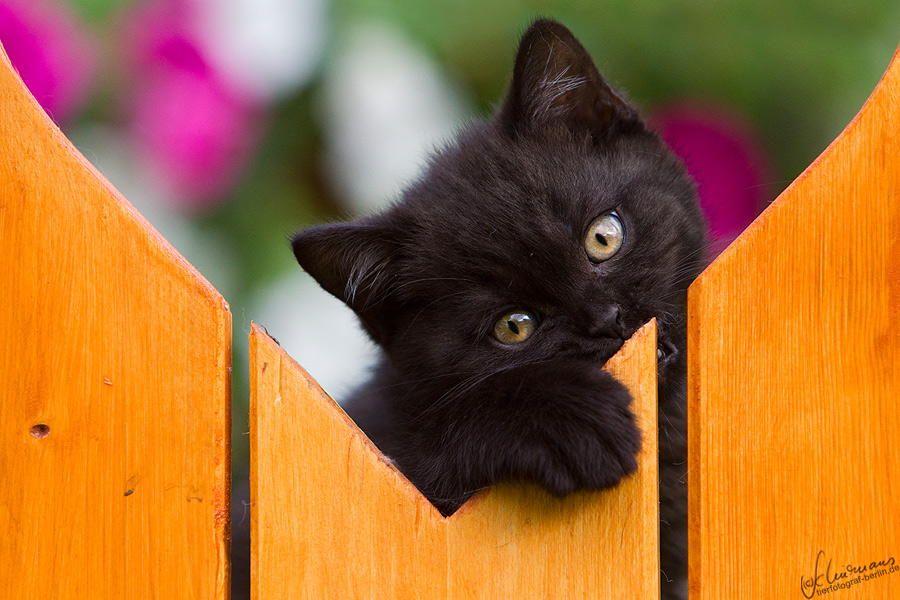 .cute black kitten | Holzwürmchen by Sandra Schürmans on 500px.