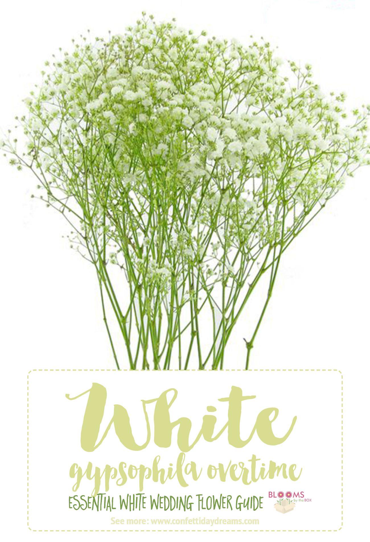Essential White Wedding Flower Guide Names Types Pics Mmlin