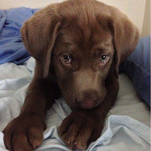 Precious puppy! Puppies, Animals, Pets
