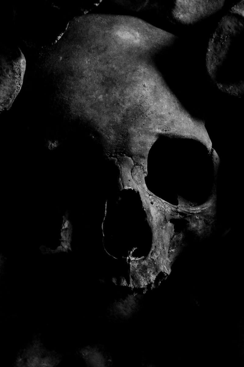 Skull · Free Stock Photo