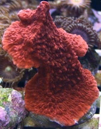 live coral gods stuff pinterest live coral
