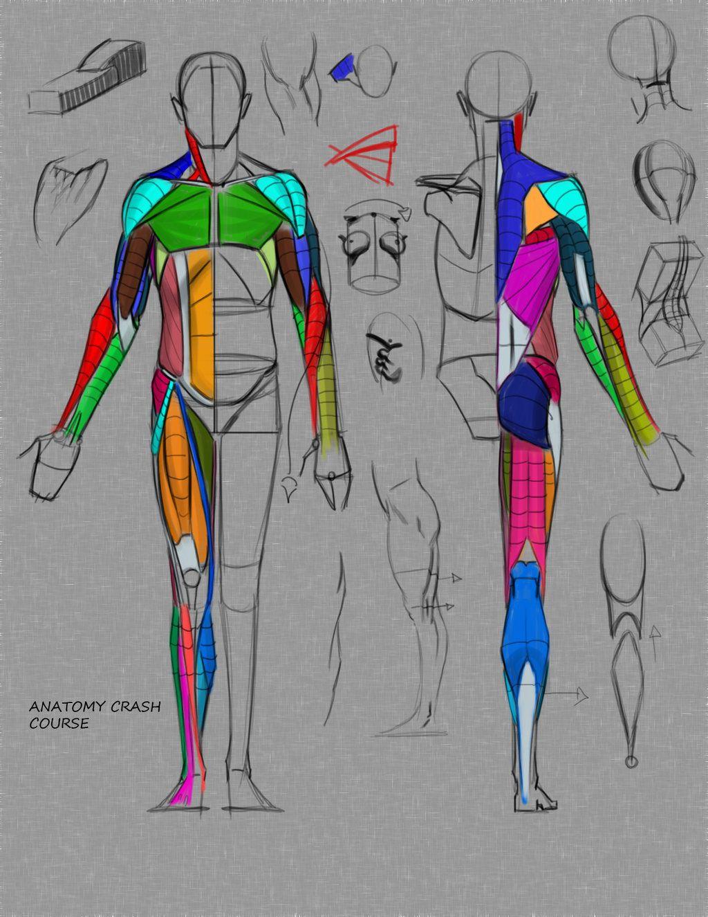Anatomy Crash Course By Funkymonkey1945iantart On