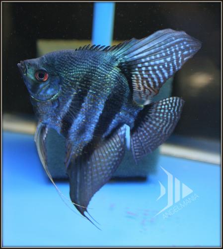 Pin On Fish Fish Fish