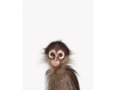 Baby Monkey Little Darling Susseste Haustiere Tierbabys Bilder Und Tierbilder
