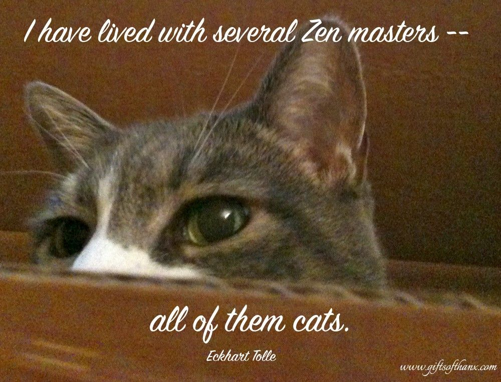 I Have Lived With Several Zen Masters All Of Them Cats