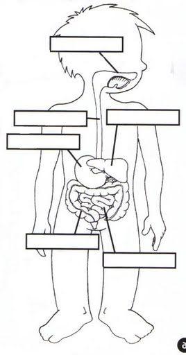 el aparato digestivo fichas infantiles del cuerpo humano para ...
