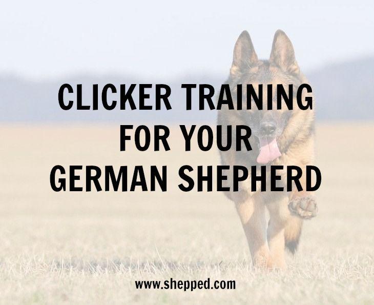 How To Clicker Train Your German Shepherd Animals Pet Care