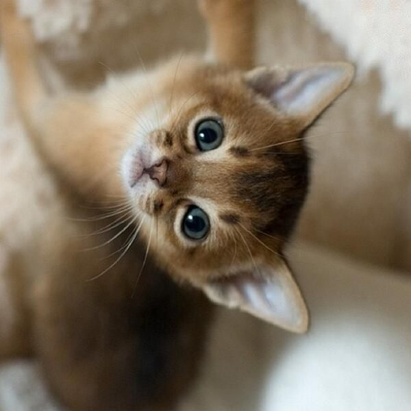 Amazingly cute! − http://bit.ly/1BVRm8r