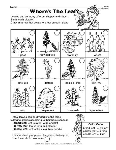 Science Worksheet Identifying Leaves The Mailbox Leaf Identification Science Worksheets Science