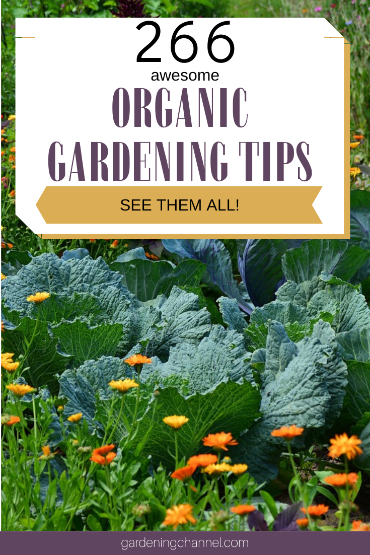 266 Organic Gardening Tips for Beginners is part of Organic gardening tips, Organic gardening, Gardening tips, Gardening for beginners, Garden, Organic - Thinking about dipping your toes into organic gardening and looking for some growing tips  We've put together this massive list of 266 different organic gardening tips for beginners  Even if you're already an experienced organic gardener, you still might pick up something new with this list  Got a tip of your own  Leave a comment …