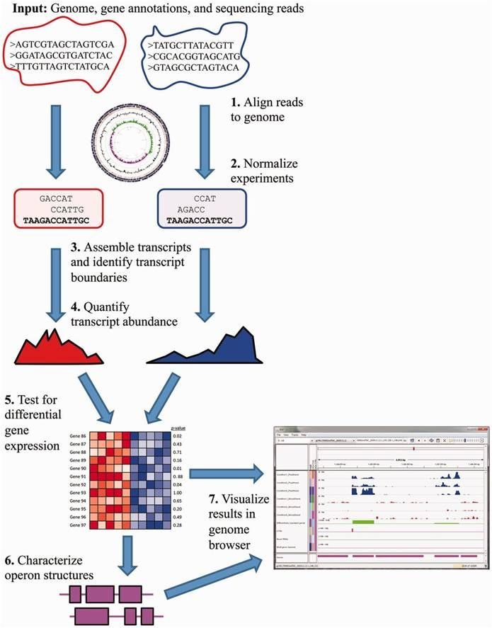 Recent advances in high-throughput RNA sequencing (RNA-seq