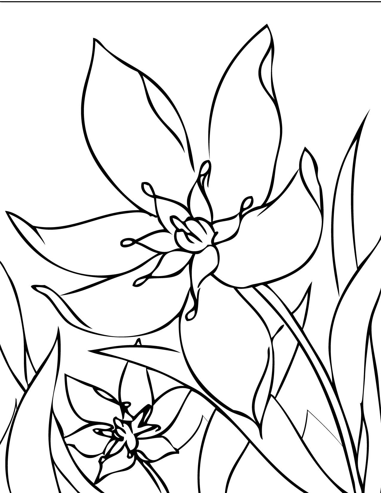 flower Page Printable Coloring Sheets | Print This Page | Spring ...