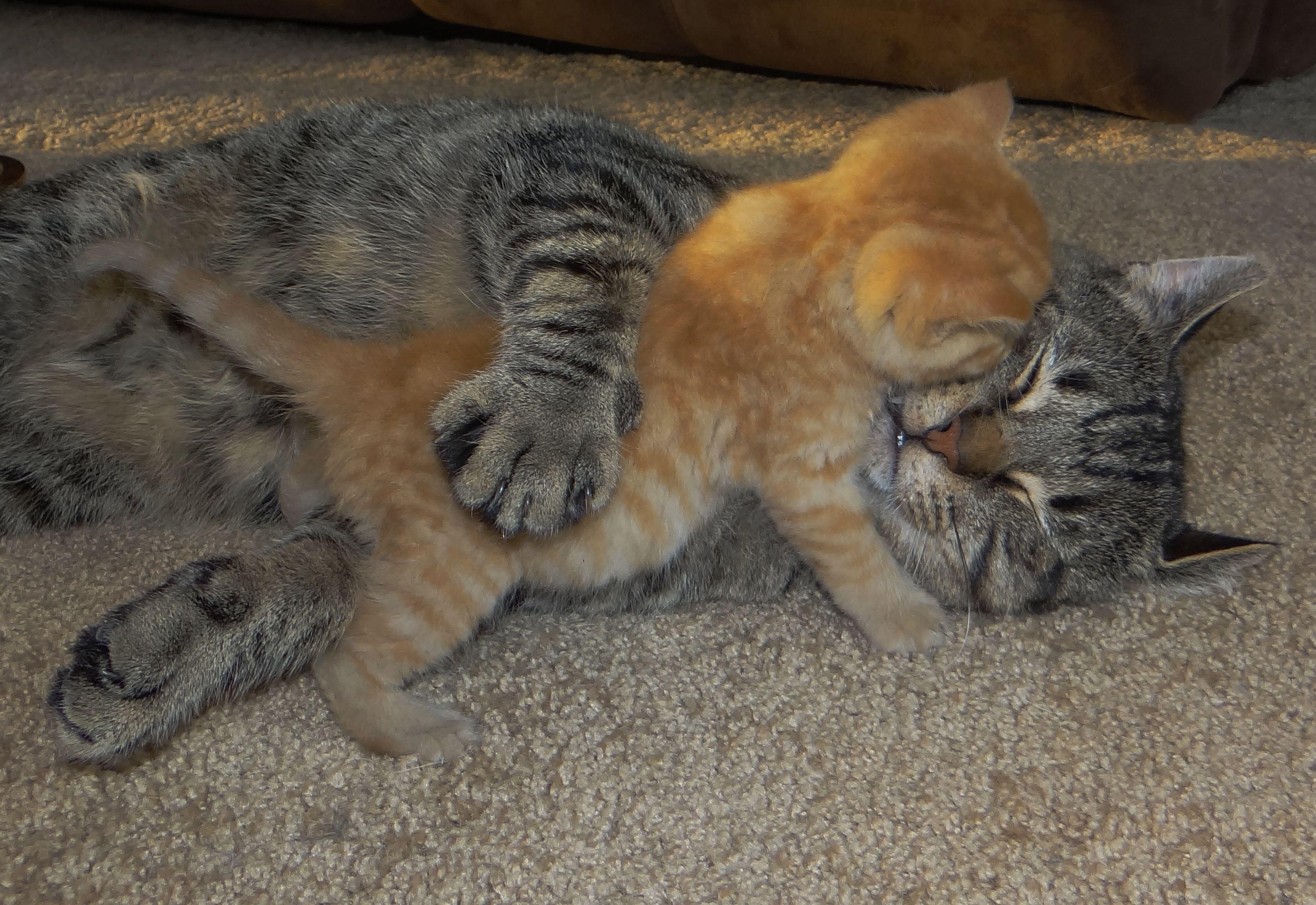 Wake Up Franklin Farmcat......I Wantz to Play  ~ Trooper Butters