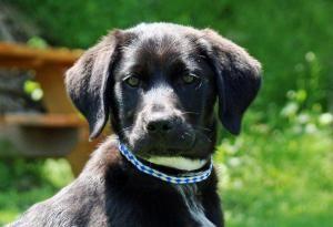 Adopt Booboo On Petfinder Beagle Dog Dogs Adoptable Beagle