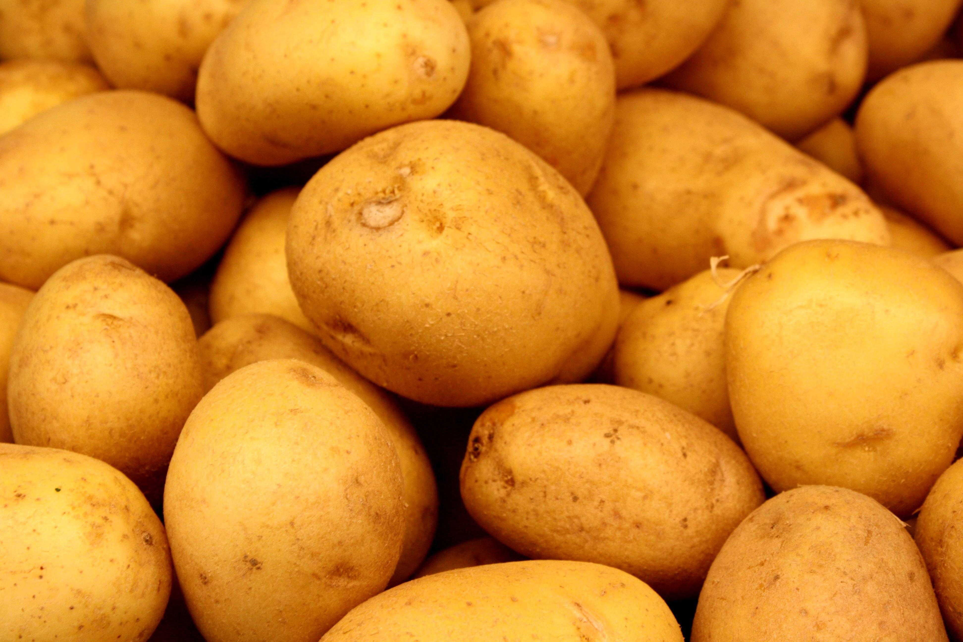 Potato Hd Wallpapers Potatoes Gmo Foods Sustainable Food