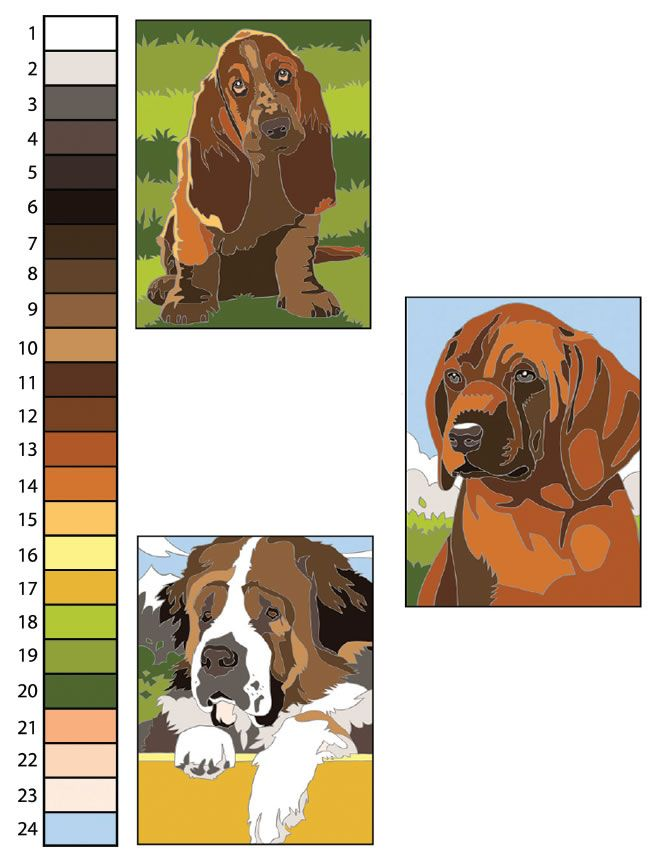 Creative Haven Dogs Color By Number Coloring Book Creative Haven