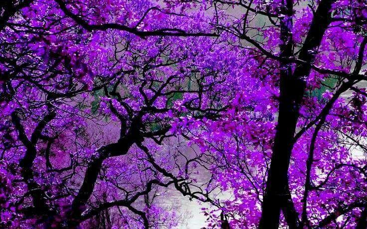 Violet Purple Color Inspiration Found In Nature Purple Calla Lilies Purple Flowers Purple Lilac