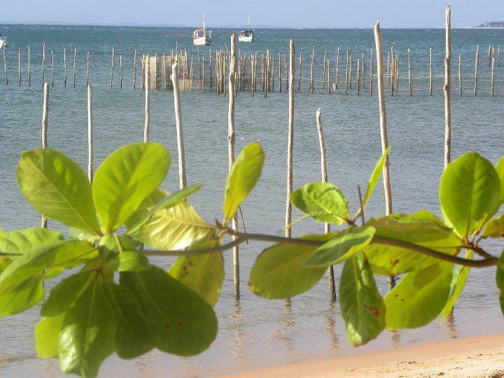 The best summer is here! Barra Grande! BA - Brasil