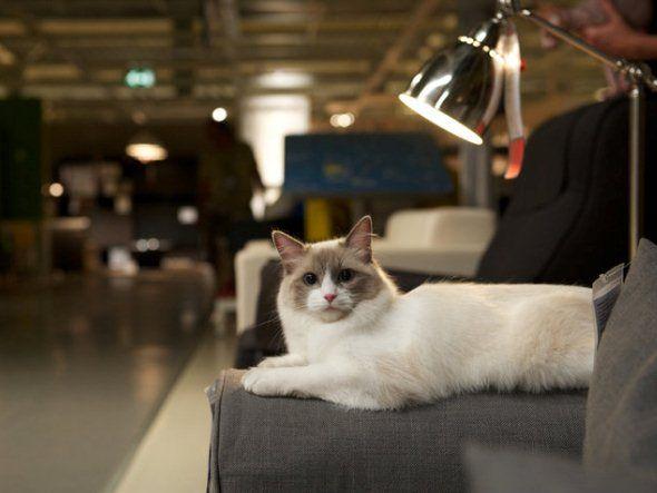 """O poder """"viral"""" dos gatos: Catvertising."""