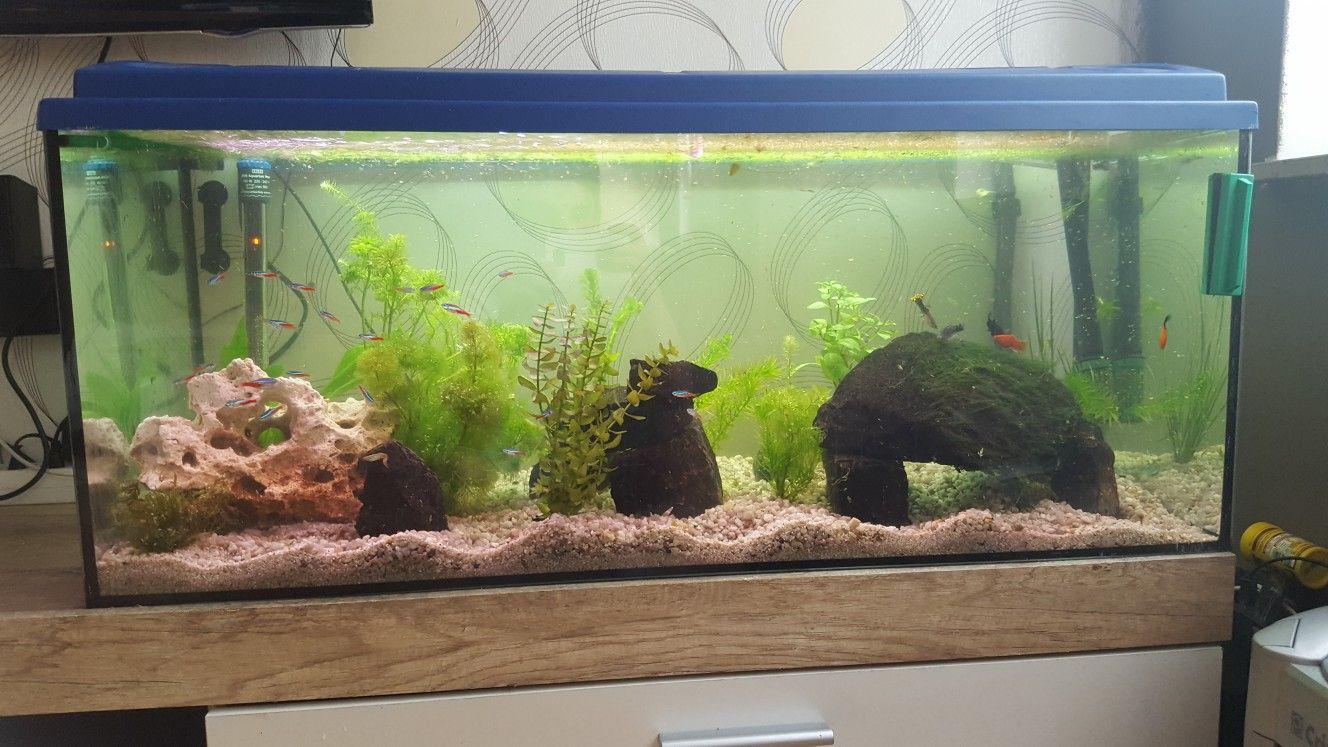 natur aquarium 180 liter aquarium einrichten aquarium. Black Bedroom Furniture Sets. Home Design Ideas