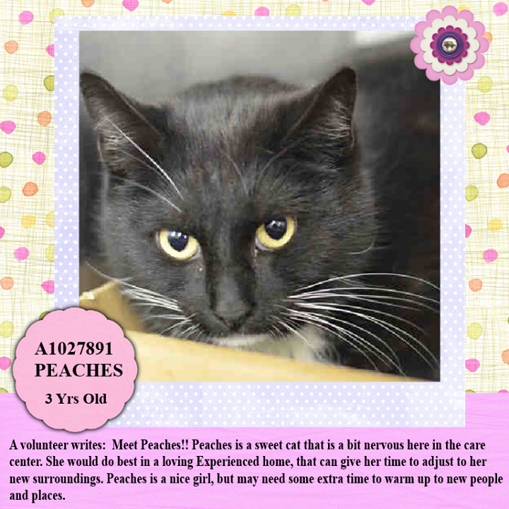 Adopted/rescued! TO BE DESTROYED 3/4/15 *NYC* PRETTY KITTY
