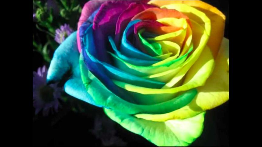تعرف على أنواع الزهور و معانيها بوكيه اكسبريس Bouquet Express Flowers Plants Rose