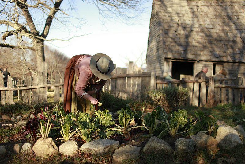Pottager garden pictures of plimoth plantation Google