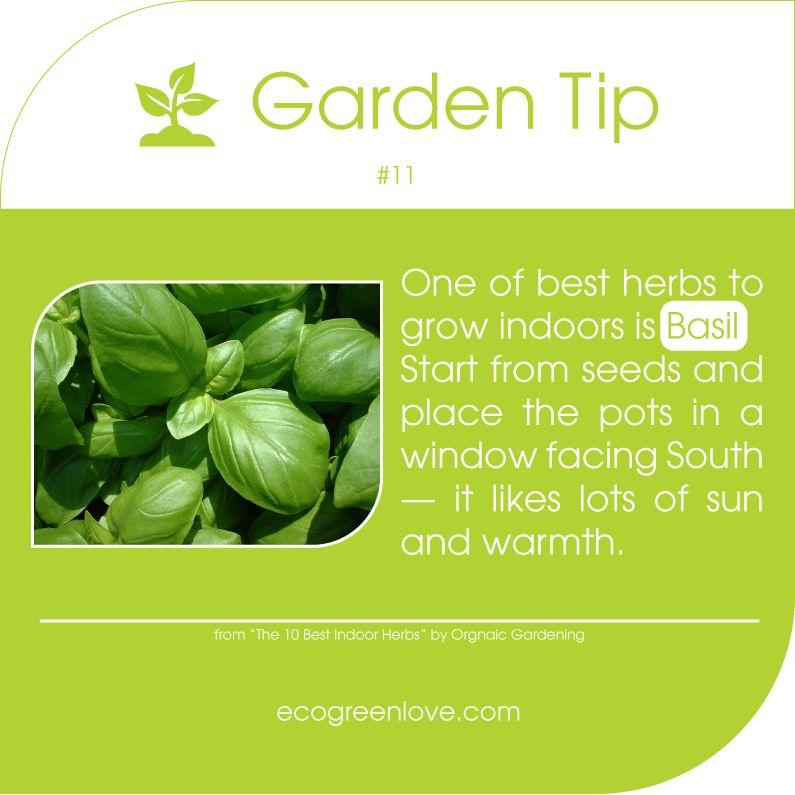 Gardening Tips 11 Basil Is An Easy Growing Indoor Herb 400 x 300