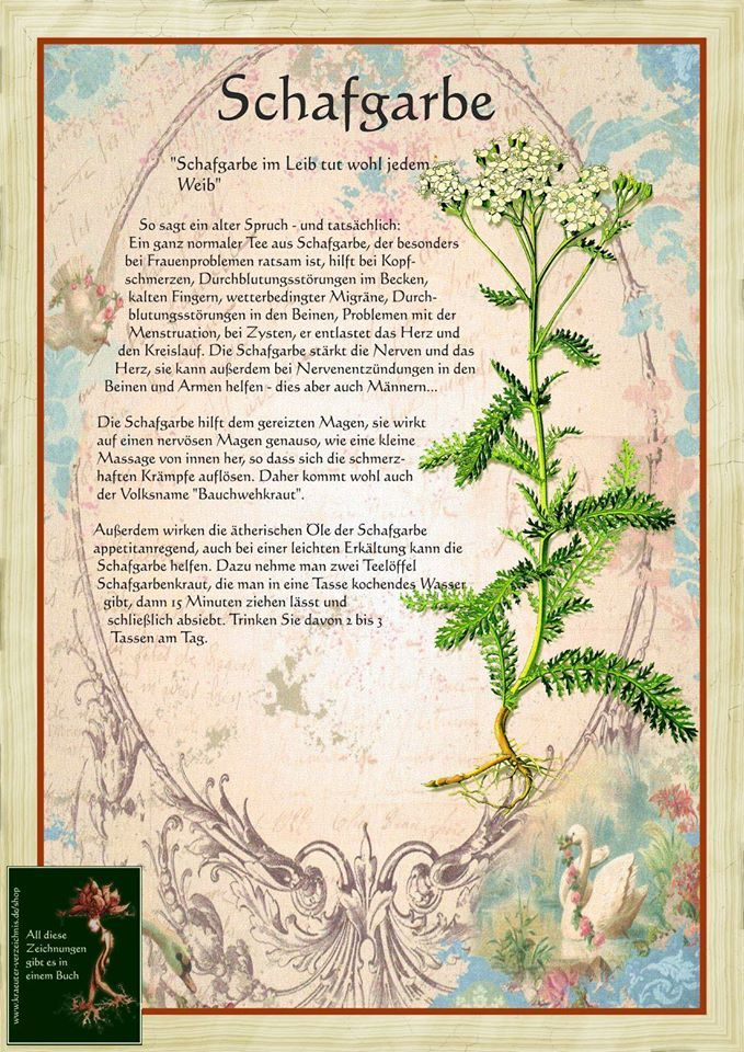 Https Www Facebook Com 471989362824278 Photos A 472012242821990 103185 471989362824278 930908050265738 Type 1 Heilpflanzen Krauter Pflanzen Pflanzen