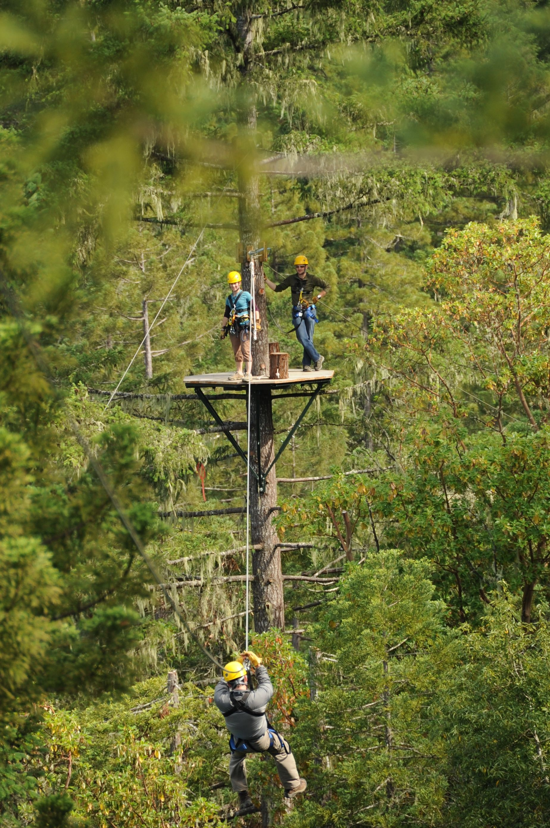 Sonoma Canopy Tours Occidental Sonoma County & Sonoma Canopy Tours Occidental Sonoma County | 101 Things To Do ...