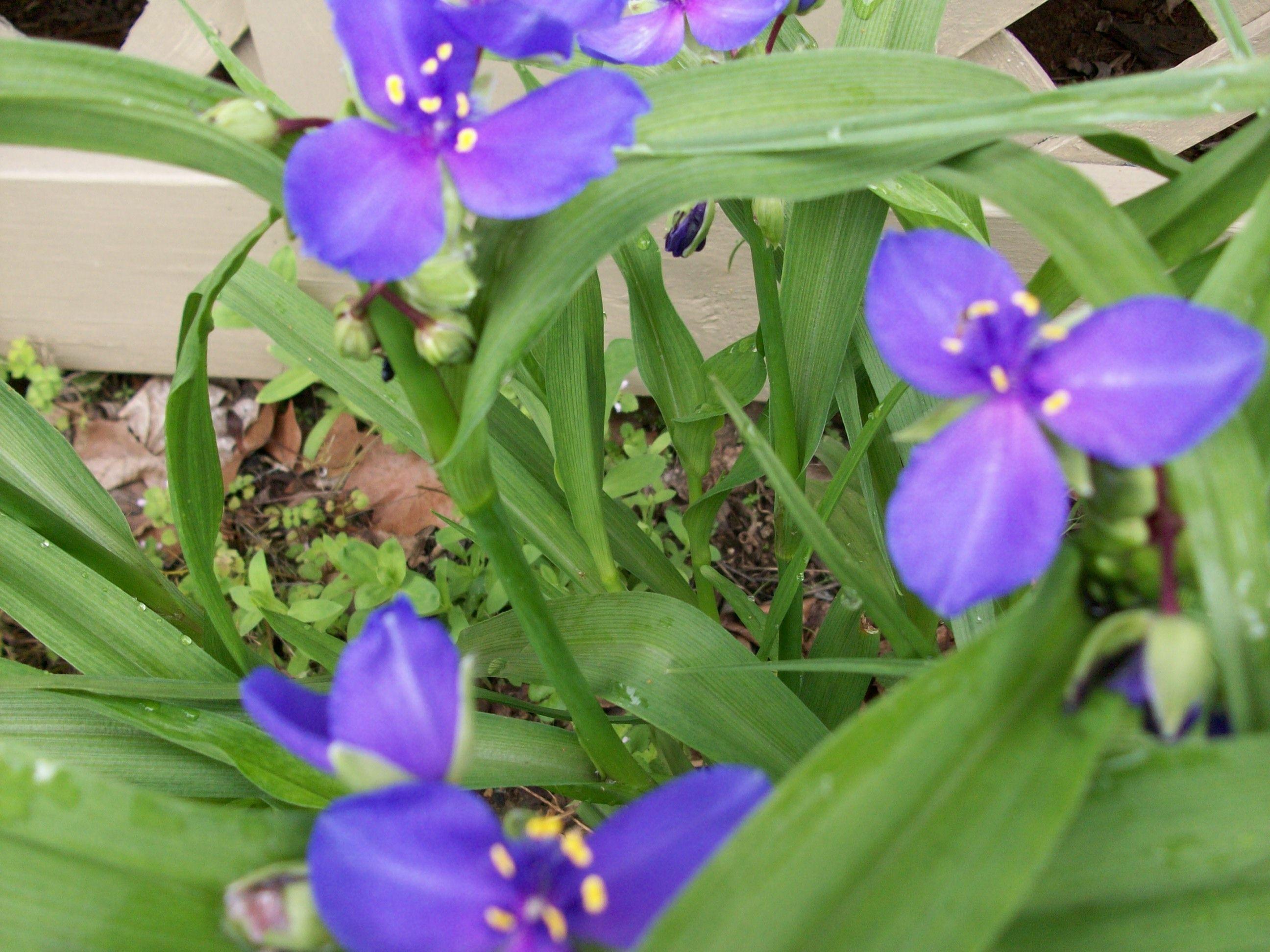 Wonderful spreading plant garden delights pinterest for Garden plants