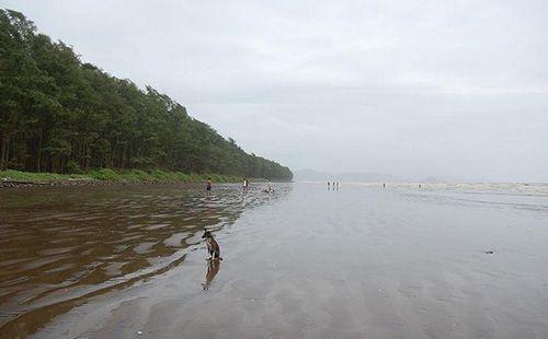 Sasawane Beach belongs to the little village of Sasawane, which is part of Alibag Taluka in Maharashtra. It falls under Raigarh district.