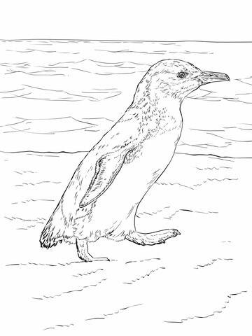 Pequeño Pingüino Azul Caminando Dibujo para colorear | pájaros y ...