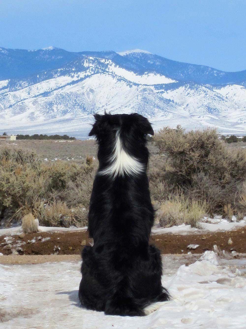 Inexpensive Dog Training DogCanEatTomato CUTE Collie