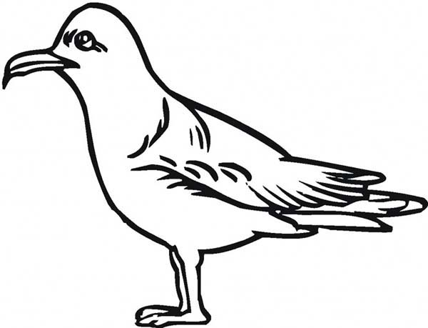 Pin By Netart On Seagull Coloring Pages Coloring Pages Drawings Coloring Pictures