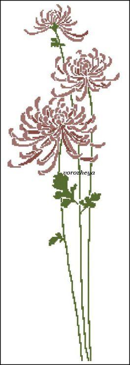 Gallery.ru / Crisantemi - Fiori, Alberi - Vorozheya