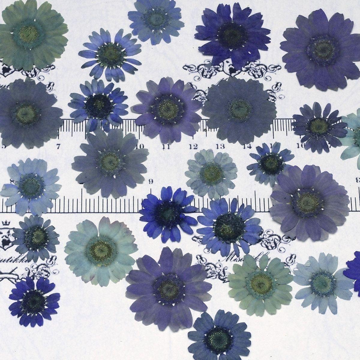 12pcs Natural Pressed Flower For Card Making /& Floral Craft DIY Phone Case