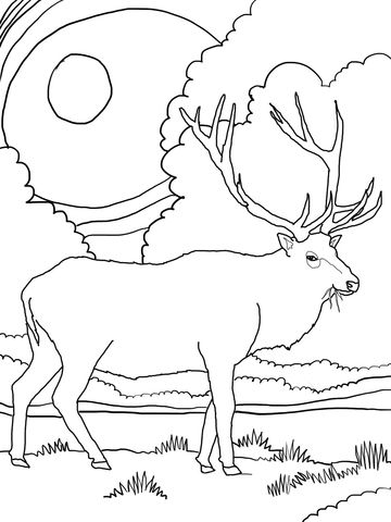 Rocky Mountain Elk Coloring Page From Deers Category Select From 24104 Printable Crafts Of Cart Online Coloring Pages Deer Coloring Pages Free Online Coloring