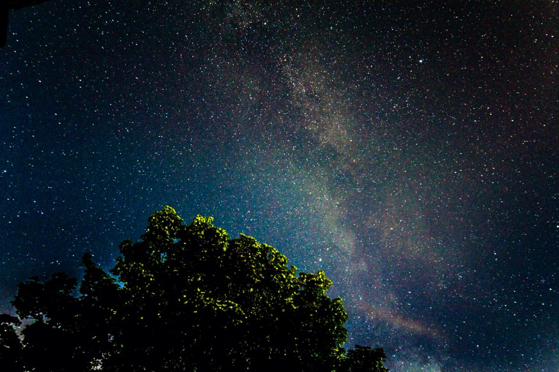 The Milkyway from my backyard hovering over the great sycamore tree at 2am during a new moon.