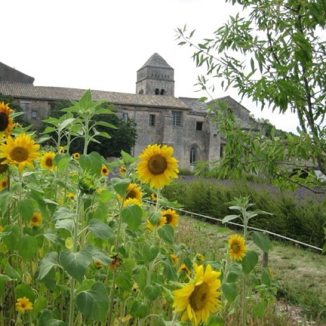 Sunflower & lavender