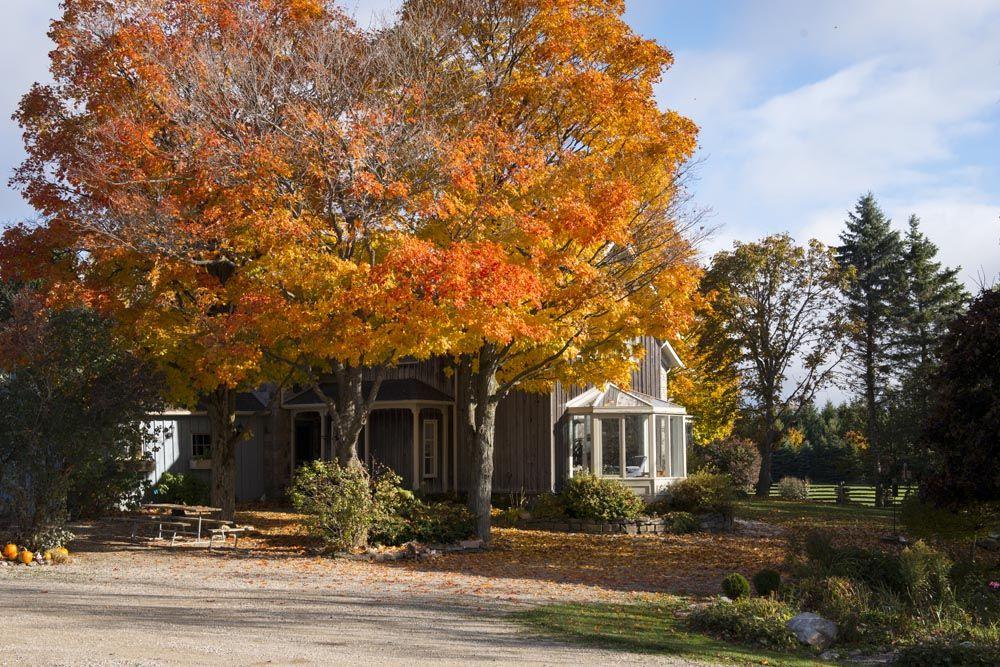 Farm Fall shoot, fall colours