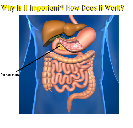 The Pancreas What It Does How To Keep It Healthy Cancer Nutrition Neuroendocrine Cancer Colonic Hydrotherapy